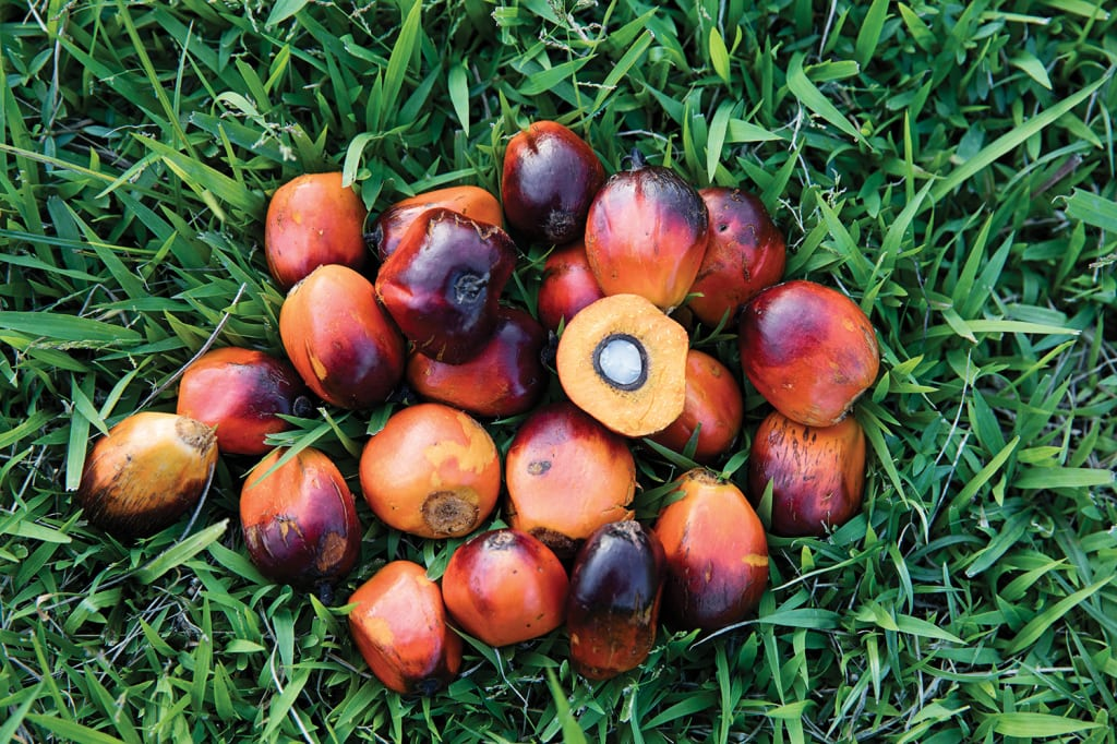 Figure 2. Palm oil is a major raw material in the specialty-chemical supply chain, and global efforts are underway to encourage its sustainble cultivation