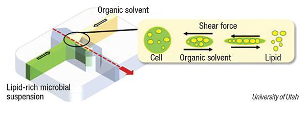 bio-crude harvesting
